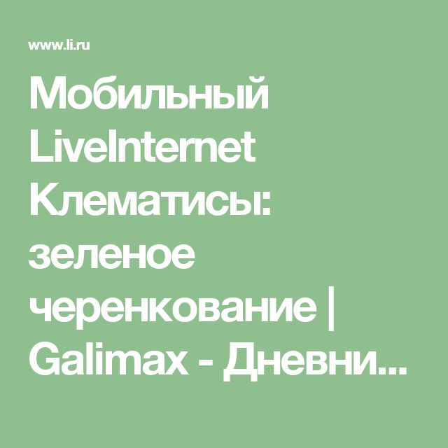 Мобильный LiveInternet Клематисы: зеленое черенкование   Galimax - Дневник Галины Дорошенко  