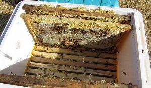 Arı Kovanı Satılık arı kovanı satılık ile ilgili aramalar, sahibinden satılık arı kovanı, satılık arı ilanları, arı kovanı fiyatları, arı kovanı imalatı, satılık polen tuzaklı arı kovanı satılık ar...
