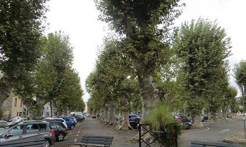 Nature et environnement - Signez la pétition : Pour la sauvegarde des 111 platanes de la Place du Foirail de Tarbes ! Non au projet d'abattage de ces arbres !
