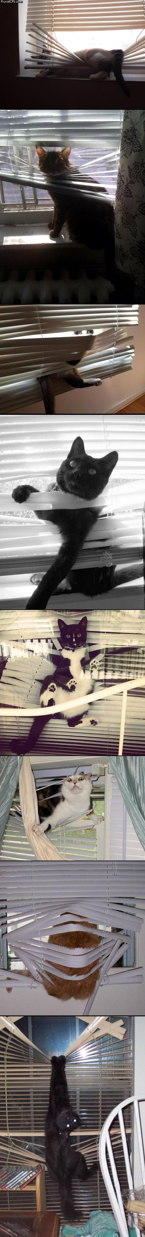 Cats in blinds that looks like something my cat would do lol.