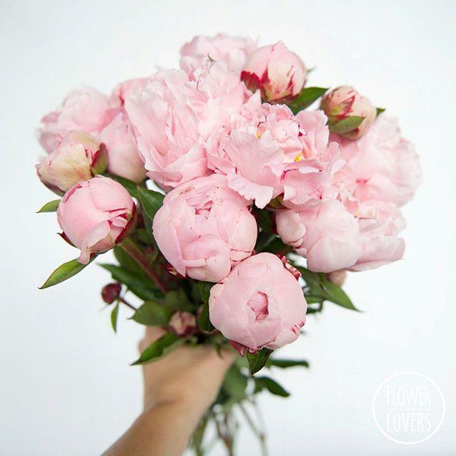 Peonies by Flower Lovers Brisbane