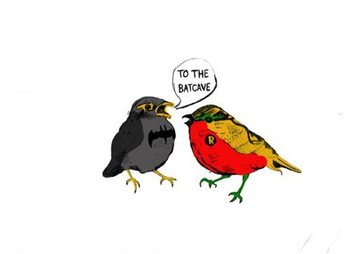 batman & robin birds.