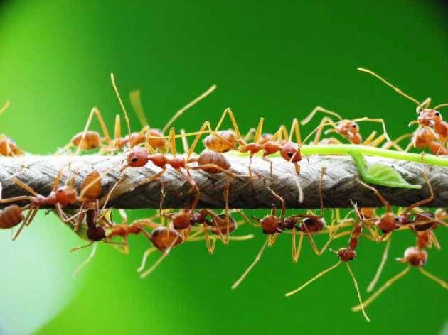 Penting! Perhatikan Hal Ini Jika Hendak Beternak Semut di Pohon http://jitunews.com/read/19885/penting-perhatikan-hal-ini-jika-hendak-beternak-semut-di-pohon #Jitunews