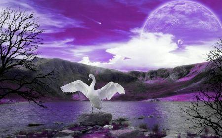 fantasy swan | Swan Song - purple, swansong, bird, swan, fantasy