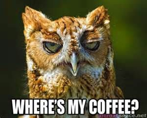 funny owl - Yahoo! Image Search Results