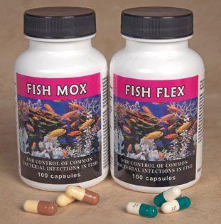 22 best fish antibiotics images on pinterest fish for Fish tank antibiotics