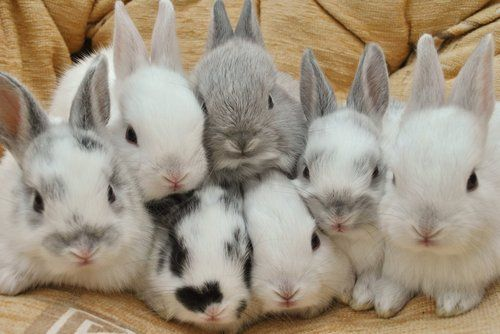 when I go into the pet store, I have to hold and name all the bunnies