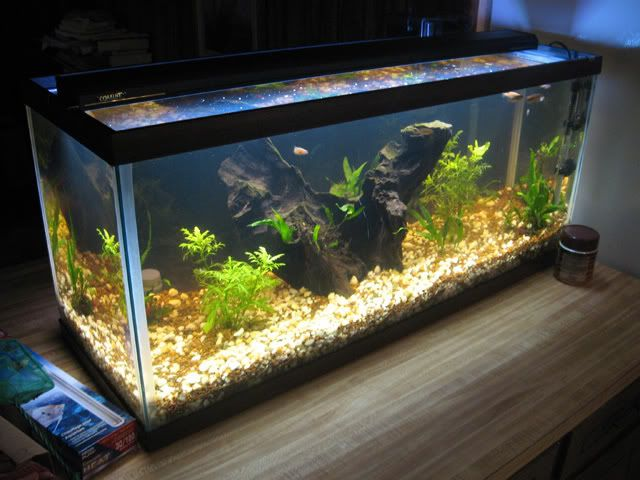 17 best images about home aquariums on pinterest aquarium stand glass fish tanks and. Black Bedroom Furniture Sets. Home Design Ideas