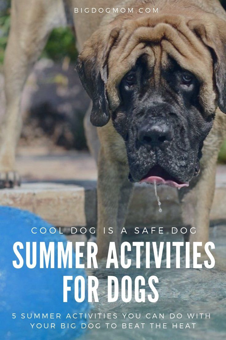 How To Keep Dogs Cool In Summer 5 Ways To Beat The Heat Safely