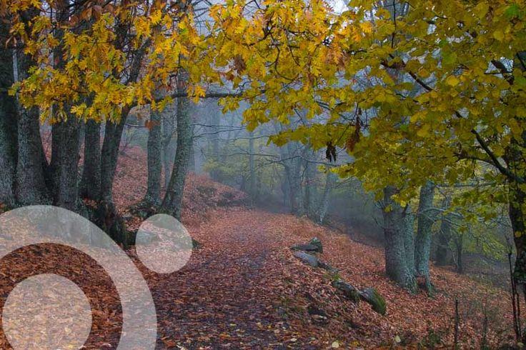 Chestnut wood in el Tiemblo. More info in http://http://valle-de-iruelas.qnatur.com/