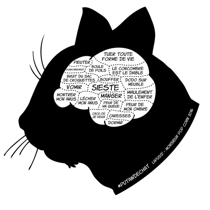 Votre chat est juste méchant, cessez de lui trouver des excuses