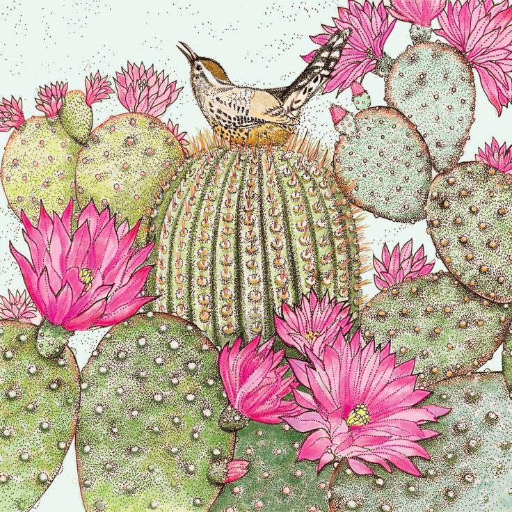 TW31 - Cactus Wren