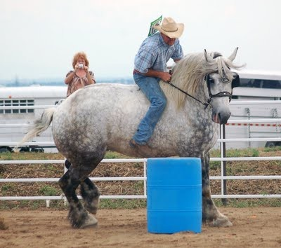 Draft horse barrel racing - who thought this up?