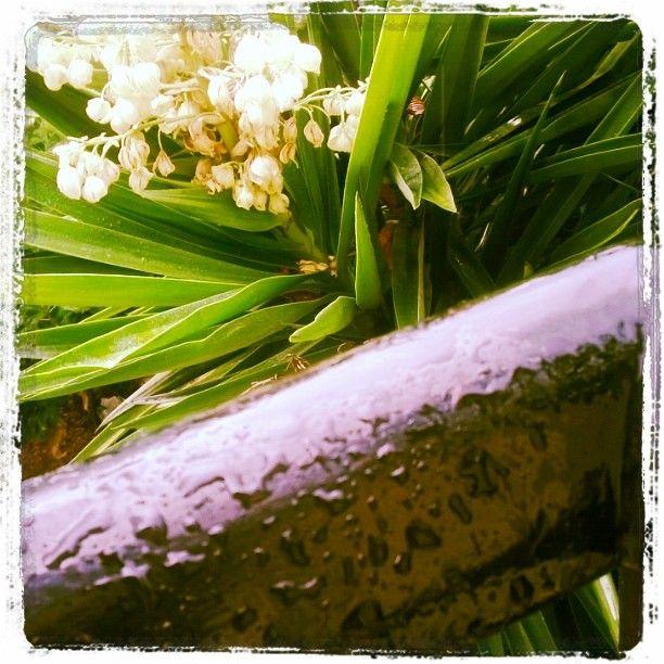 #rain #autumn
