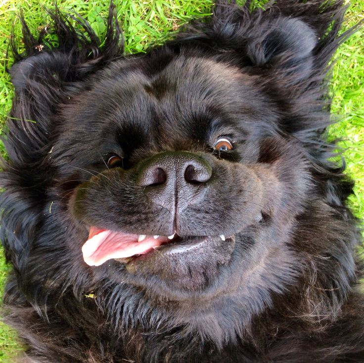 "Harley. My big beautiful Newfoundland dog. He's a star!Hope you're doing well..From your friends at phoenix dog in home dog training""k9katelynn"" see more about Scottsdale dog training at k9katelynn.com! Pinterest with over 20,800 followers! Google plus with over 180,000 views! You tube with over 500 videos and 60,000 views!! LinkedIn over 9,300 associates! Proudly Serving the valley for 11 plus years! Now join us on instant gram! K9katelynn"