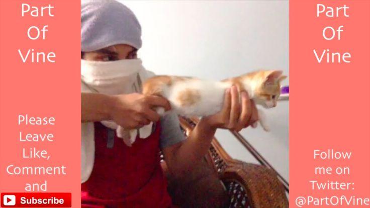 Funny Cats 2015 - Vine Compilation - BEST VINES ✔️