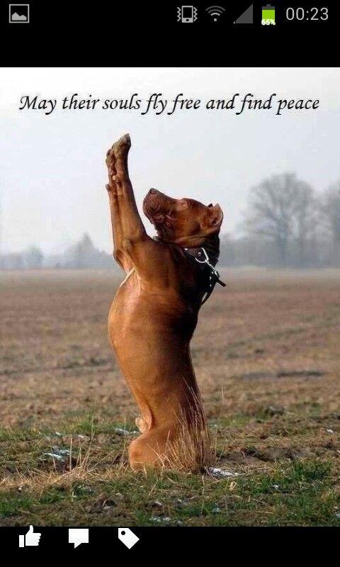 A Pitbulls Prayer Pitbull Lover Pinterest Pitbulls