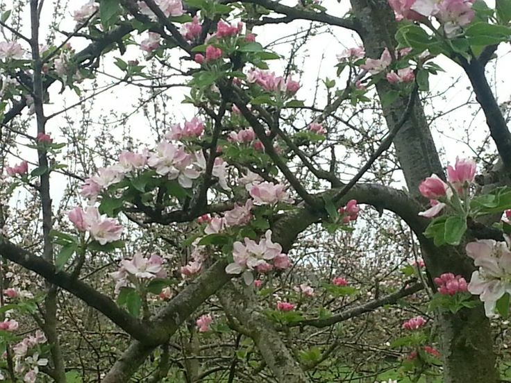 The orchards all coming into blossom. Absolutely stunning!!!