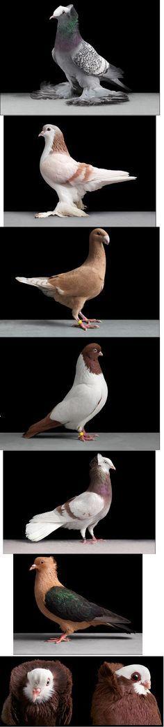 More fluffy stuff doves