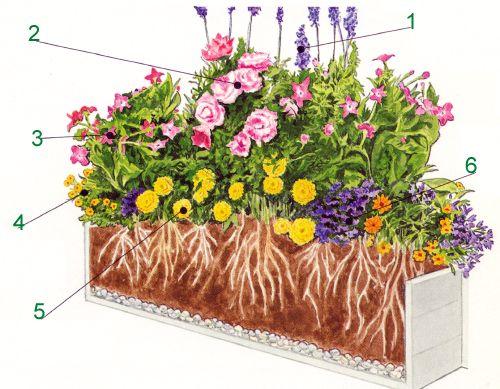 Bunter sommerlicher Blumenkasten bepflanzt in Regenbogenfarben belebt jede Fensterbank und bringt Sommerstimmung auch an trüben Tagen