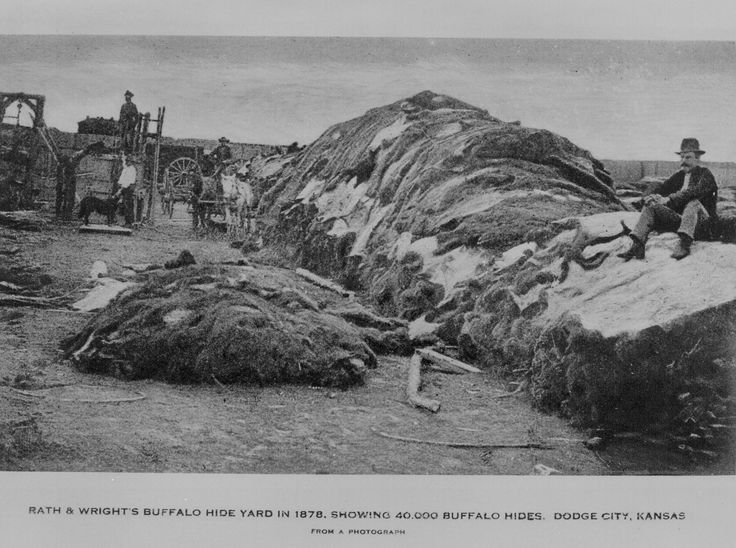 Rath & Wright's buffalo hide yard in 1878, showing 40,000 buffalo hides. We took all they had and give them winter without a shirt.
