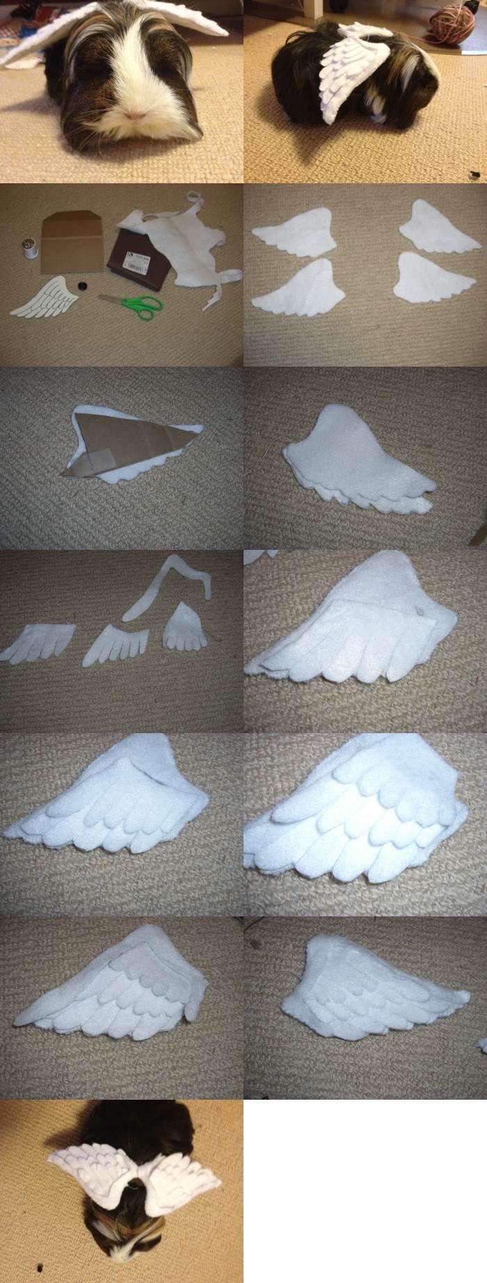 DIY Angel Wings for Guinea Pigs 2