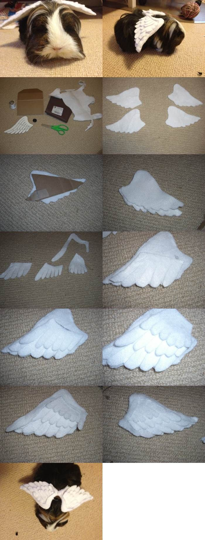 DIY Angel Wings for Guinea Pigs 2