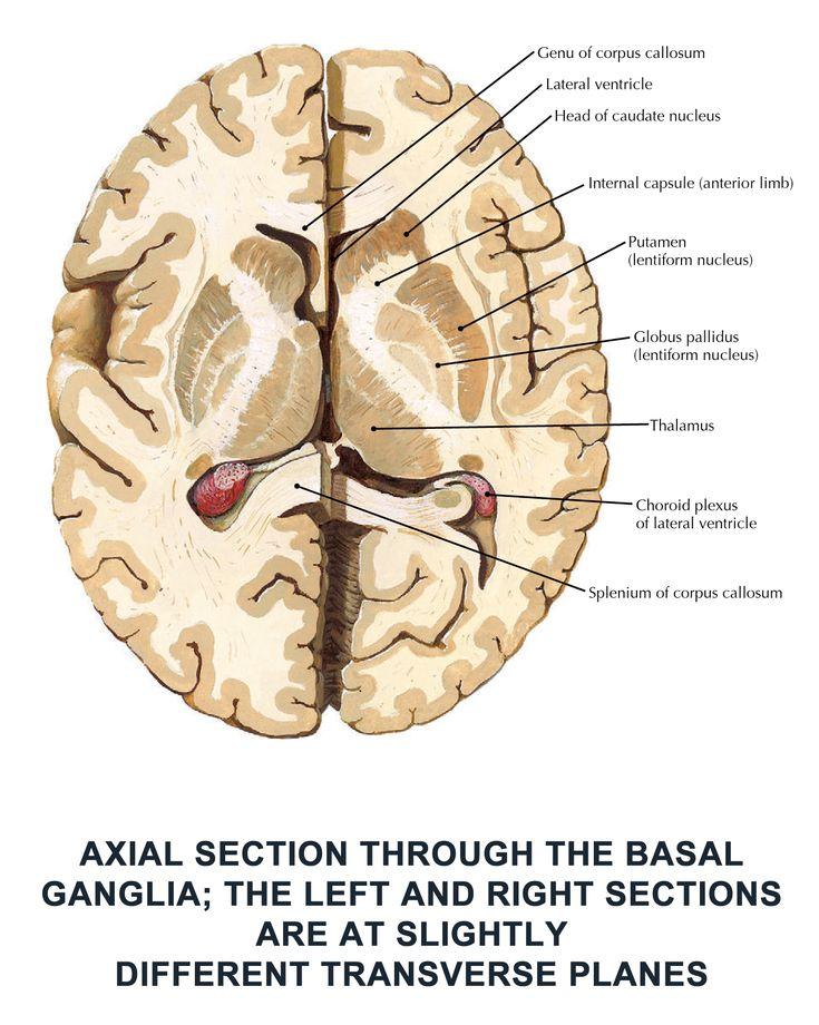 358 besten Neuroscience Bilder auf Pinterest | Medizin ...