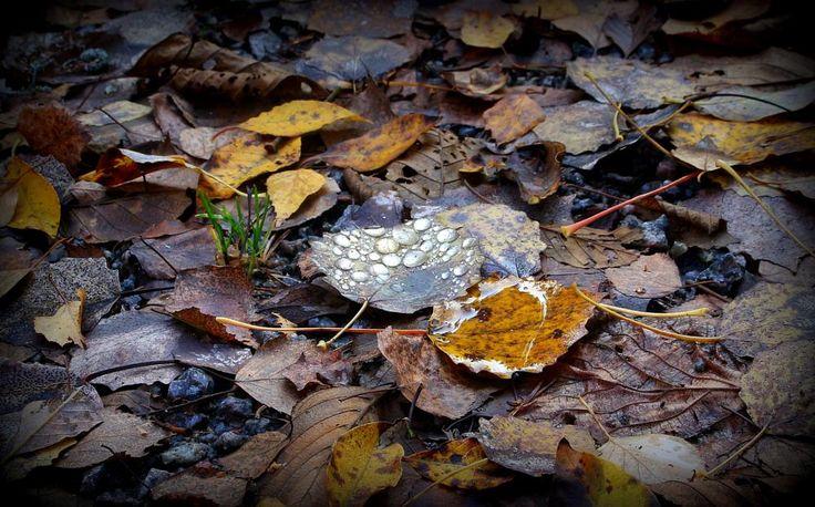 A drop on a leaf by susannemkarlsson