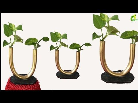 (30) money plant growing idea/money plant table top decoration/money plant/organ… – anna