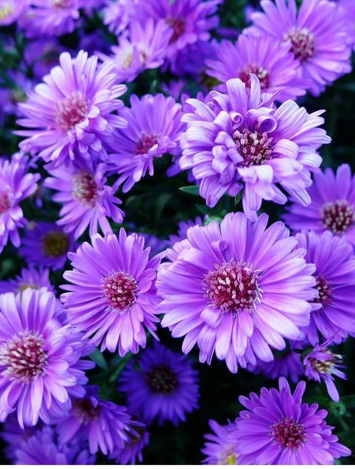 Justin Vo Love Flowers Pflanzen Blumen Natur
