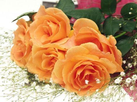 růže pro všechny přátele...Roses for all friends (88 pieces)