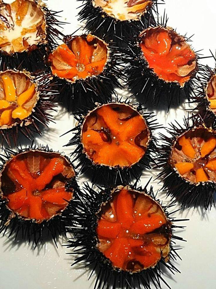 Sea Urchins in #Calasetta #Sardinia Italy