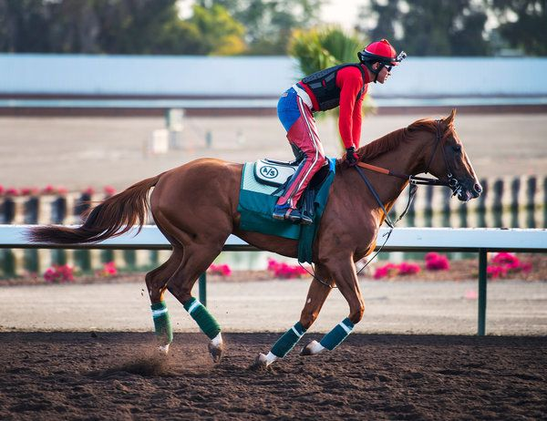 Art Sherman Ties the Kentucky Derby Favorite, California Chrome, to a Past Winner - NYTimes.com