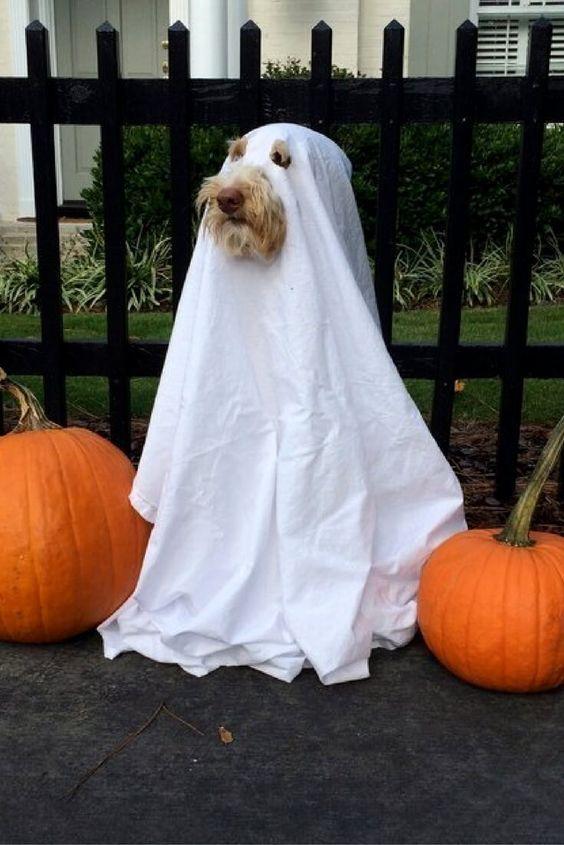 30 perros disfrazados de fantasma