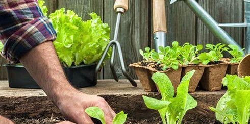 Чистые продукты для семьи: С чего начать органическое земледелие на огороде