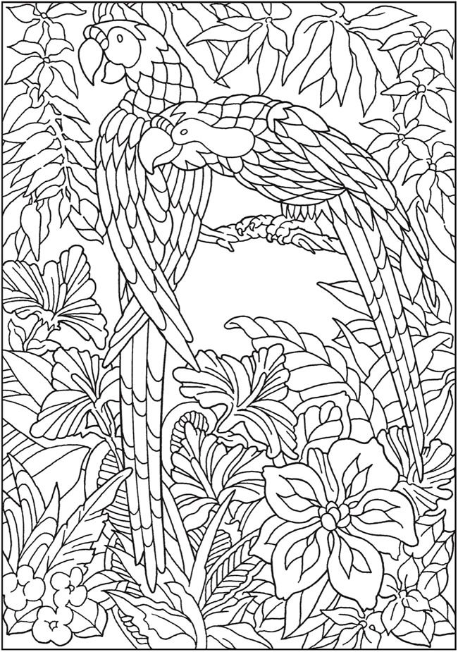 Welcome To Dover Publications Creative Haven Paradise Designs Coloring Book
