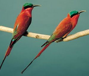 Umgeni River Bird Park