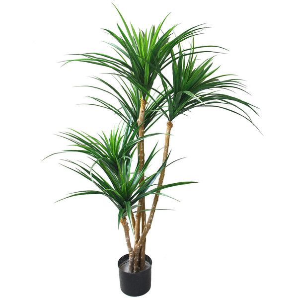 Romano Tropical Yucana Tree Bring The Tropics Home With The In This Tropical Yucana Tree Stands Over Four Feet Tall And Comes Planted In A Sturdy