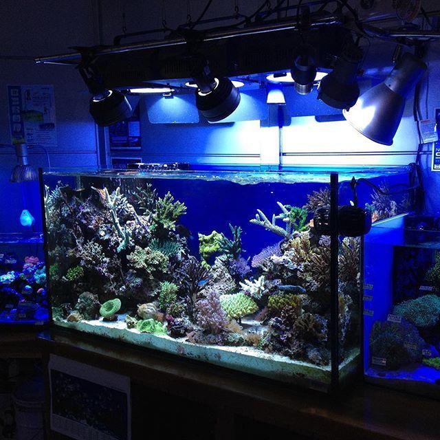 【cotup】さんのInstagramをピンしています。 《a.m.p aquarium tank 1200x450x600 #アクアリウム #ガラス水槽 #オーダーメイド #オーバーフロー #サンゴ #海水魚 #ミドリイシ #水族館 #水槽 #amp #apn #サンゴ #ミドリイシ #水族館 #水槽#インテリア #水槽 #大型水槽 #コットアップ #海水水槽 #海水魚水槽 #水草水槽 #レイアウト水槽 #魚 #熱帯魚 #reeftank #coraltank #リーフタンク》