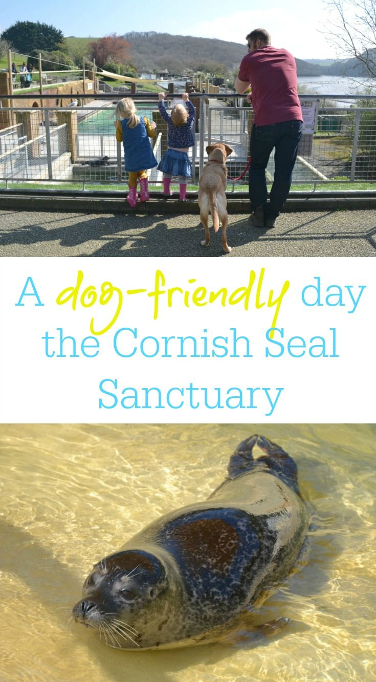 A dog-friendly day at the Cornish Seal Sanctuary in Gweek, Cornwall. Family activities at this conservation attraction that rescues 40 to 50 seals a year