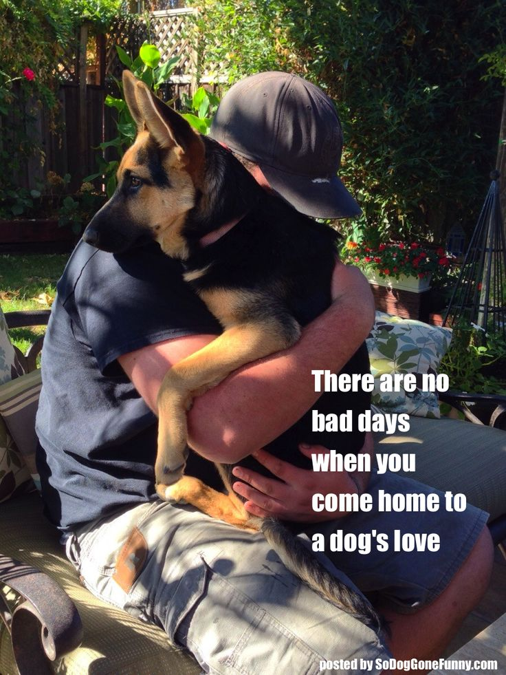 So DogGone Funny!: There are no baby days when you come home to a dog's love | German Shepherd