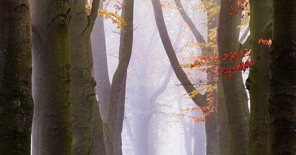 Culori în ceață