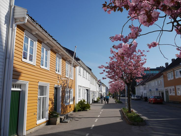 Cherry blossom in the old town Posebyen in Kristiansand, Southern Norway.  Photo: E.Høibo©Visit Southern Norway
