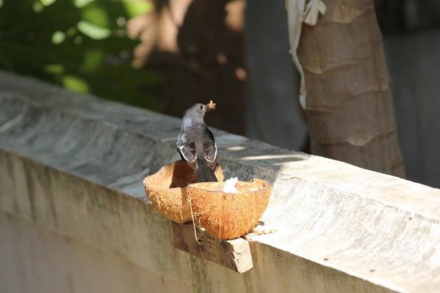 DIY :: Bird Feeder: using Coconut Shells