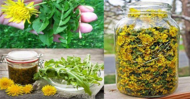 Ta popularna roślina pomoże Ci w walce z infekcjami, a nawet rakiem! Możesz ją dodać do wszystkiego   Popularne.pl