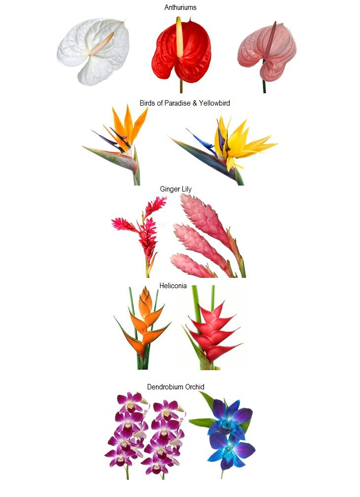 Tropical Flowers by Name | Tropical flower arrangements ...
