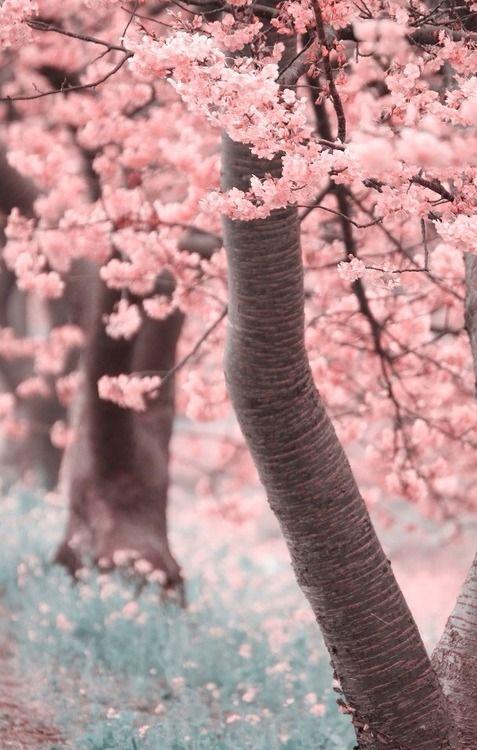 Jardim na Primavera