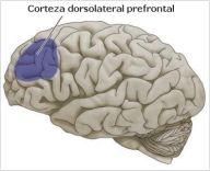Fibromialgia: Un nuevo estudio prueba que la Fibromialgia tiene ...