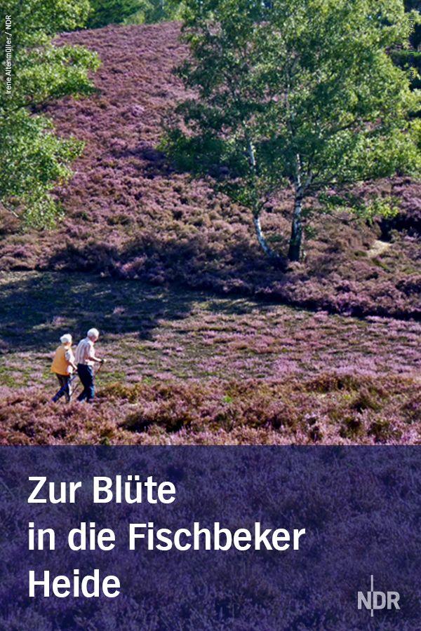 Wandern In Der Fischbeker Heide Ausflug Reisen Deutschland Fahrradtour